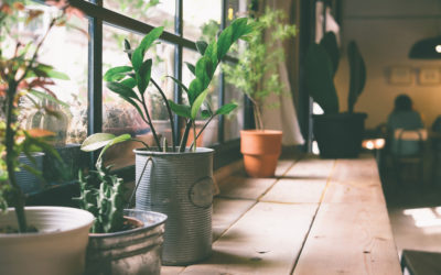 Indoor Plants – A Breath of Fresh Air