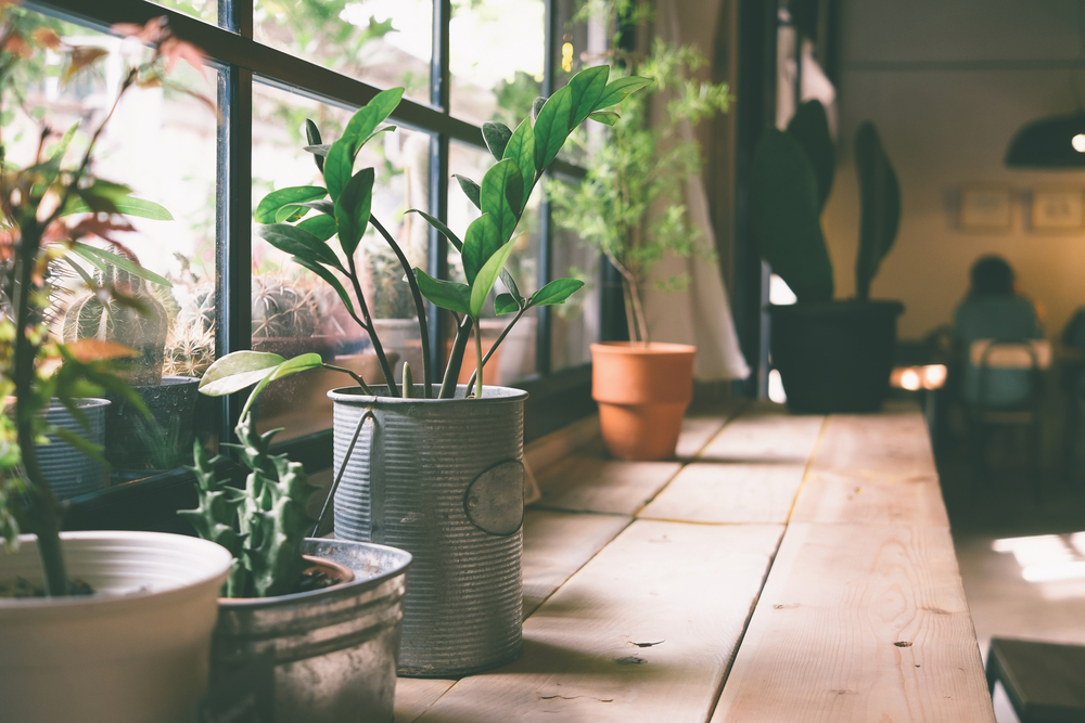 Indoor Plants – A Breath of Fresh Air